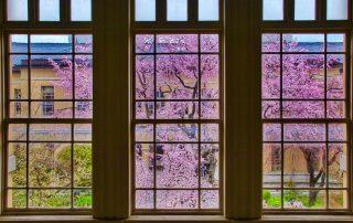 fönsterputs företag stockholm