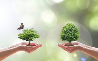 hållbarhet miljöansvar